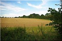 TL9030 : Harvest Home Near Chappel by Glyn Baker
