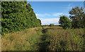 TQ5582 : Path near Warwick Wood by Roger Jones