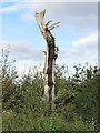 TQ5683 : Dead Tree by Roger Jones
