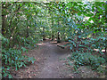 TQ5682 : Woodland Path by Roger Jones