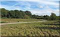 TQ5682 : Path near White Post Wood by Roger Jones