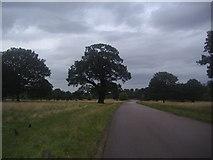 TQ2173 : Priory Lane before Roehampton Gate by David Howard
