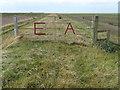 TF5825 : E A on a five barred gate on the sea bank by Richard Humphrey