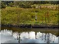 SJ9483 : Heron on Macclesfield Canal by David Dixon
