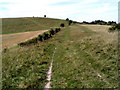 SP9514 : On the Ridgeway, looking back at Pitstone Hill by Peter S