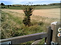 SP9616 : On the Icknield Way, towards Ivinghoe Beacon by Peter S