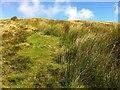 SC4187 : Grasses on the hillside by Andrew Abbott