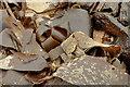 J4181 : Seaweed, Cultra by Albert Bridge