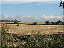 TL6353 : Stubble and Brinkley Road by John Sutton