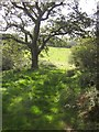 SY2893 : Path below Musbury Castle by Derek Harper