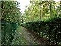 TL4059 : Footpath through Madingley Wood by John Sutton