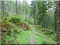 NY2721 : Paths in Great Wood by Ian S