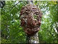 NT4227 : A face in the forest, Bowhill by Jim Barton
