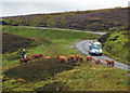 SD9899 : Cattle droving by motorbike, Surrender Bridge by Karl and Ali