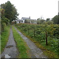 SN8846 : Entrance drive to  Llanwrtyd Hall, Llanwrtyd by Jaggery