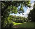 SX9267 : Field by the John Musgrave Heritage Trail by Derek Harper