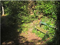 SX9065 : Tree and seat, Chapel Hill Pleasure Grounds, Torquay by Derek Harper