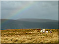 NY4810 : Sheep and rainbow, Point 673m by Karl and Ali