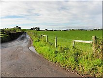 H4965 : Lane, Moylagh by Kenneth  Allen
