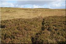 SD7221 : Path on Hoddlesden Moss by Bill Boaden