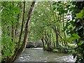 SX3171 : River Lynher approaching Kerney Bridge by Robin Drayton