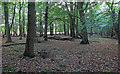TL4101 : Brookmeadow Wood interior by Roger Jones