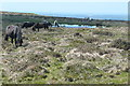 SX6560 : Ponies near the tramway by Graham Horn