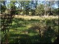 NJ6401 : Marshy ground near Fordie Farm by Stanley Howe