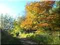 NS3183 : Small wood overlooking Helensburgh Golf Course by Stephen Sweeney