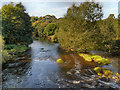 SJ9091 : River Tame, Reddish Vale Country Park by David Dixon