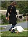 SU3802 : Beaulieu: a goose and a pedestrian by Chris Downer