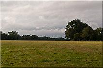 TQ4660 : North of Washneys Road  by Ian Capper