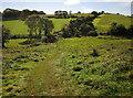 SX8864 : Cockington valley at Horse Barton by Derek Harper