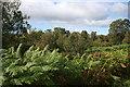 NN7460 : Roadside Vegetation by Anne Burgess