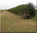 TA0614 : Hedgerow near Burnham by David Wright