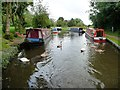 SP0272 : Swan family and moored narrowboats near bridge 60 by Christine Johnstone