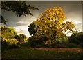 TQ2629 : Autumn Colours by Kurseong Carl
