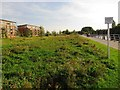 SO8453 : Wildflower meadow under development by Christine Johnstone