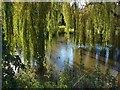 SU9362 : Windlesham arboretum by Alan Hunt