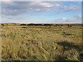 TQ8297 : Lowlying land behind the embankment by Roger Jones