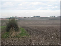SE9346 : Holme Wold by Jonathan Thacker