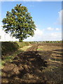 SP9726 : Ploughed field near Hockliffe by Philip Jeffrey