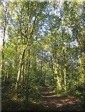 TQ2374 : Path on Putney Heath by Derek Harper