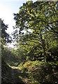 TQ2273 : Path on Putney Heath by Derek Harper