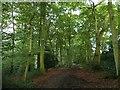 SP9008 : The Ridgeway through Northill Wood by Rob Farrow