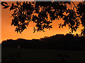 TQ3449 : Sunset over South Park (2) by Stephen Craven