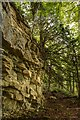 ST7964 : Bath Stone in the Woodland by Doug Lee