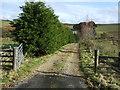 NY9391 : Track to Ravenscleugh by JThomas