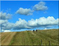 SU0248 : 2012 : A walk on Salisbury Plain by Maurice Pullin