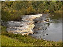 NY9170 : Chollerford Weir, River North Tyne by David Dixon